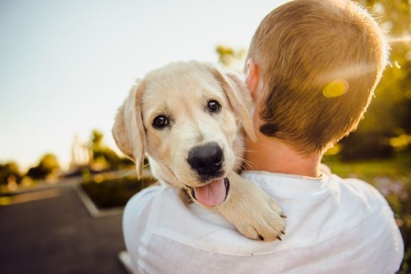 куче и дете