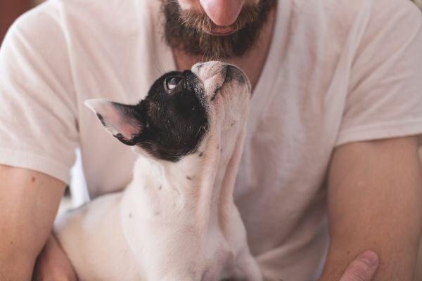 куче и мъж