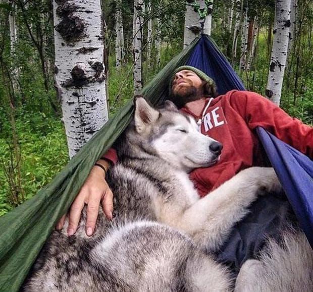 куче и стопанин спят