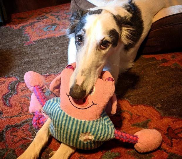 куче с играчка