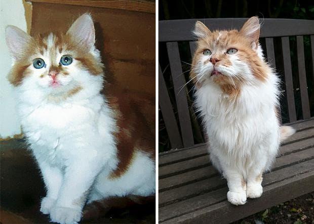 най-възрастната котка в света