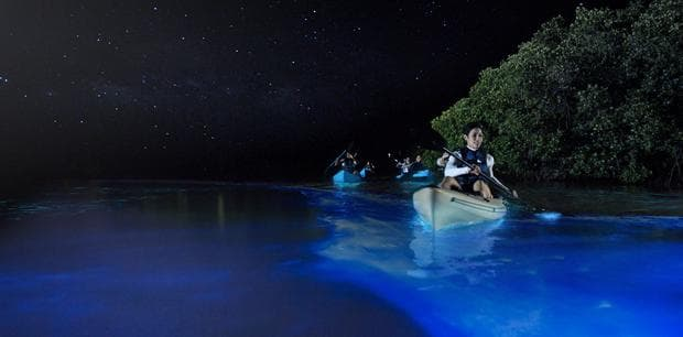 Залив на комарите