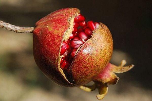 Храни-афродизиаци за повишаване на мъжкото либидо