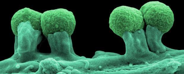 Полусинтетични микроорганизми