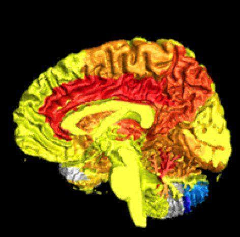 човешки ум
