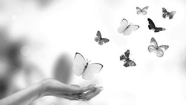 пеперуди, свобода