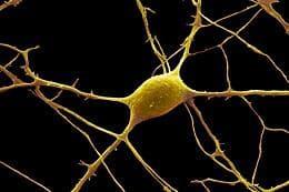неврон
