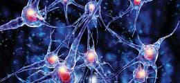 нервни мрежи
