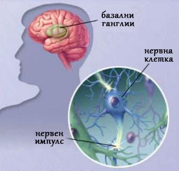 Нервни клетки и болестта на Паркинсон