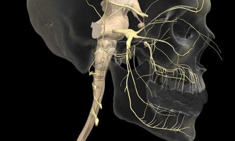 Троичен нерв