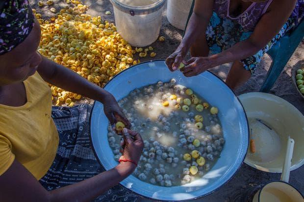 обработка на плодове марула