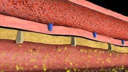 образуване на урина