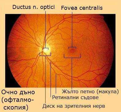 Очно дъно (офталмоскопия)