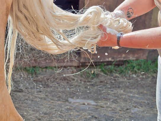 Опашка на кон