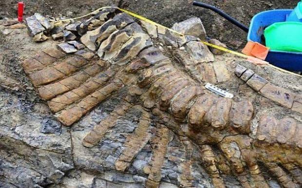 Опашка от динозавър