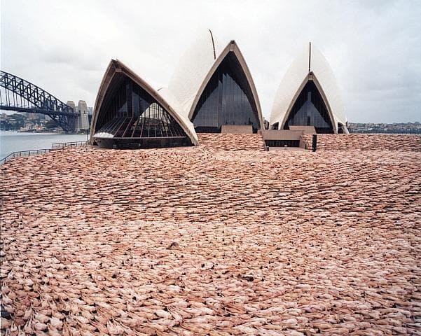 Фотография в Сидни