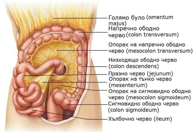 Опораци на тънко и дебело черво