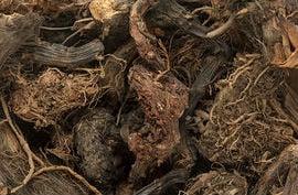 корени на колеус форсколий