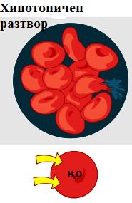 осмотична хемолиза
