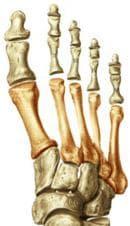 Предноходилни кости