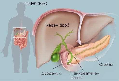 панкреас устройство и местоположение