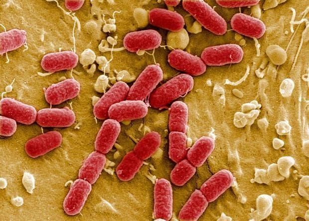 патогени