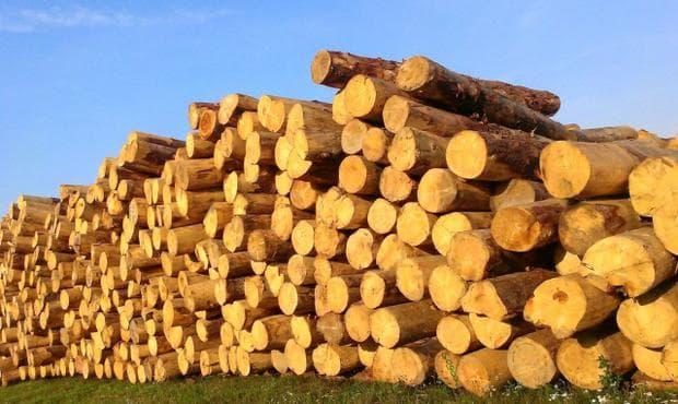 дървесина на пауловния