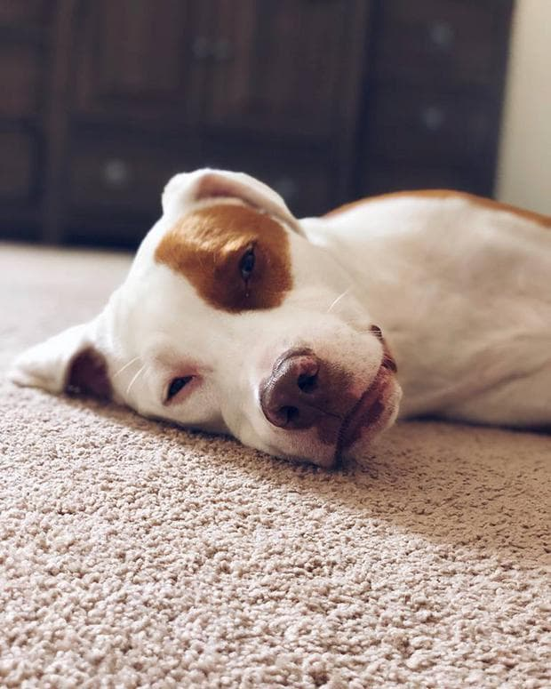 Кучето на Кристина - Пити