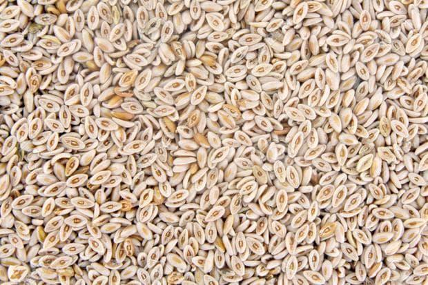 семена на индийски бял живовляк