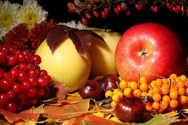 плодове калина