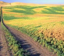 поле с леща