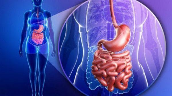 Полезни свойства на пребиотиците