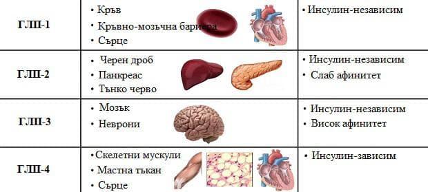глюкозни преносители