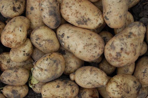 Прибиране на реколта от картофи
