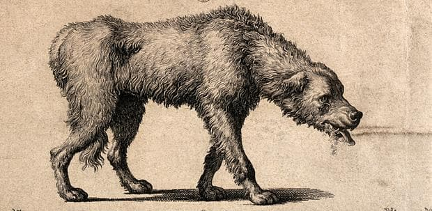 Куче, болно от бяс, стара илюстрация