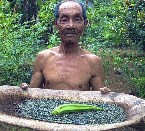 Бамята е широко използвана в Африка и Азия