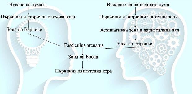 речева функция