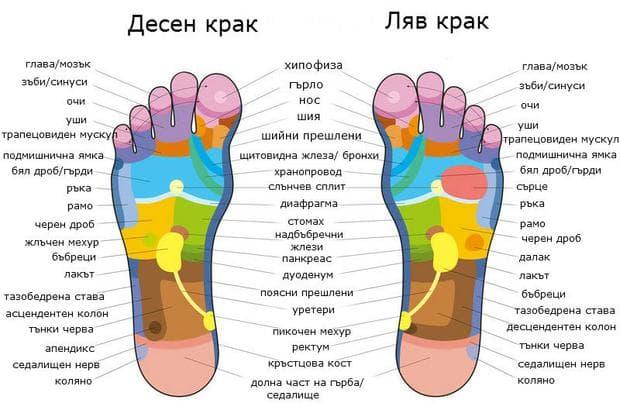 Рефлексогенни зони на ходилата