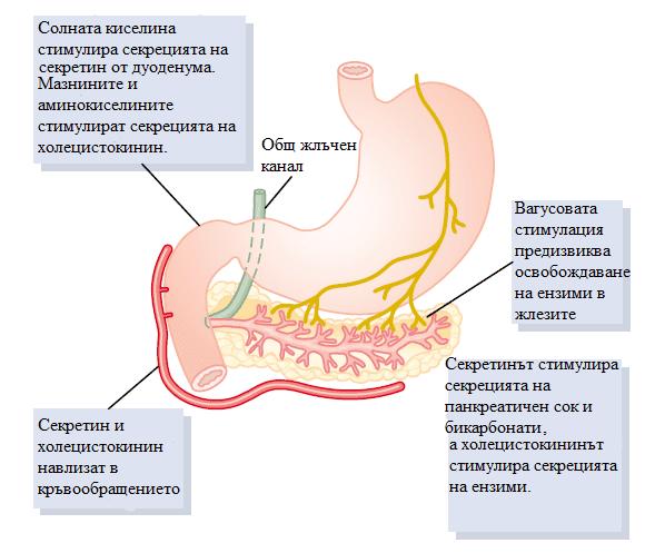 регулация на панкреатичната секреция