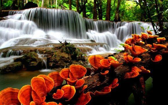 рейши и природата