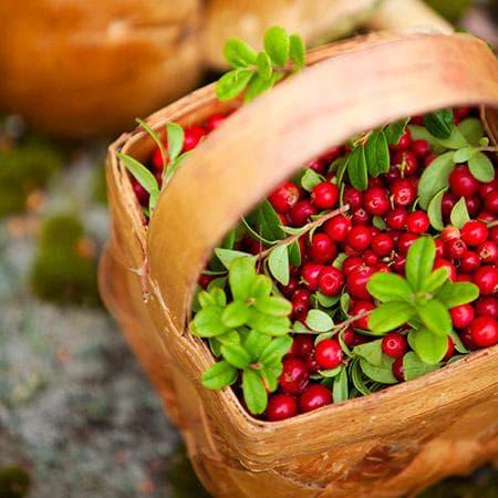 Богатата реколта изтощава растението