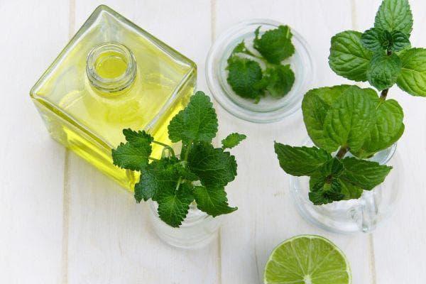 етерични масла против насекоми