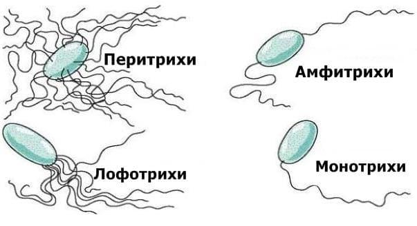 Групи бактерии