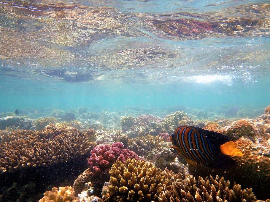 Рифовете в Червено море