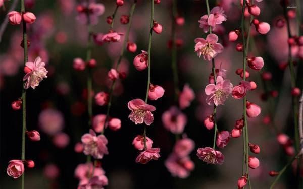 Розови цветчета