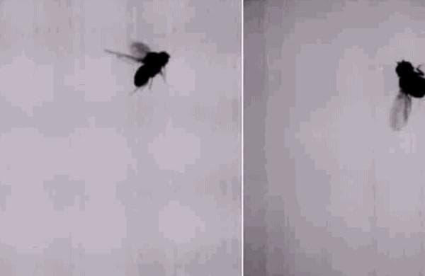 летающая муха гифка вниманию красивую