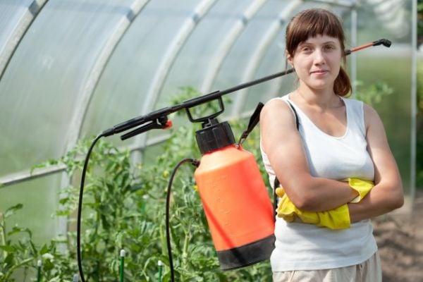 С какво да пръскаме доматите в оранжерия, за да добием богата реколта?