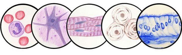Други уточнени системни нарушения  на съединителната тъкан