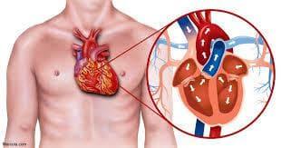 Устройство на сърдечния мускул