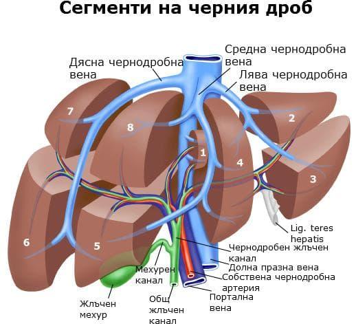 Сегменти на черен дроб
